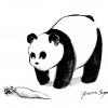 Pandaikon
